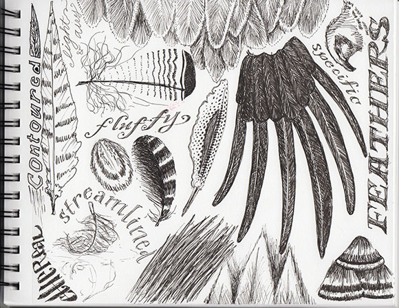 Intermediate Track, Brief 3, Feathers sketching by Jessica Southwick